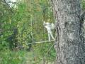 Kitsejaht, 15.09-17.09.2006 006