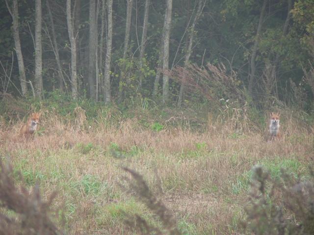 noored rebased01_ 25_09_2008